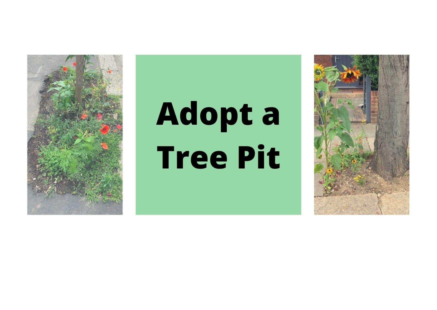 two tree pits with flowers blooming from them. The words 'adopt a tree pit' appear between the two images.